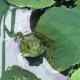 Frog-Gotta Kiss a Princess